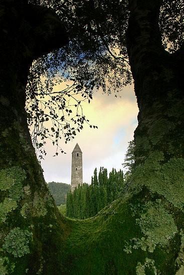 Tree Portal, Glendalough, Ireland