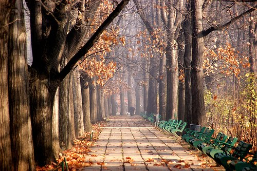 Autumn Park, Bucharest, Romania