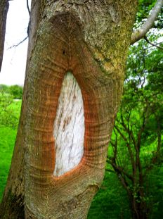 hole in tree trunk1