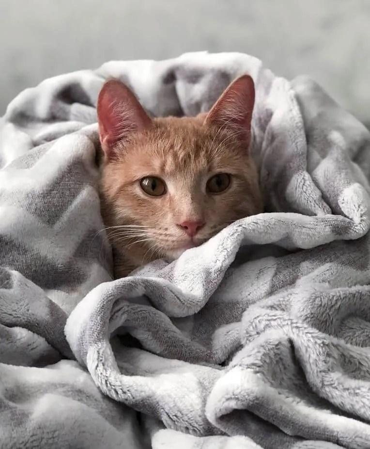 coryza du chat meilleurs traitements naturels