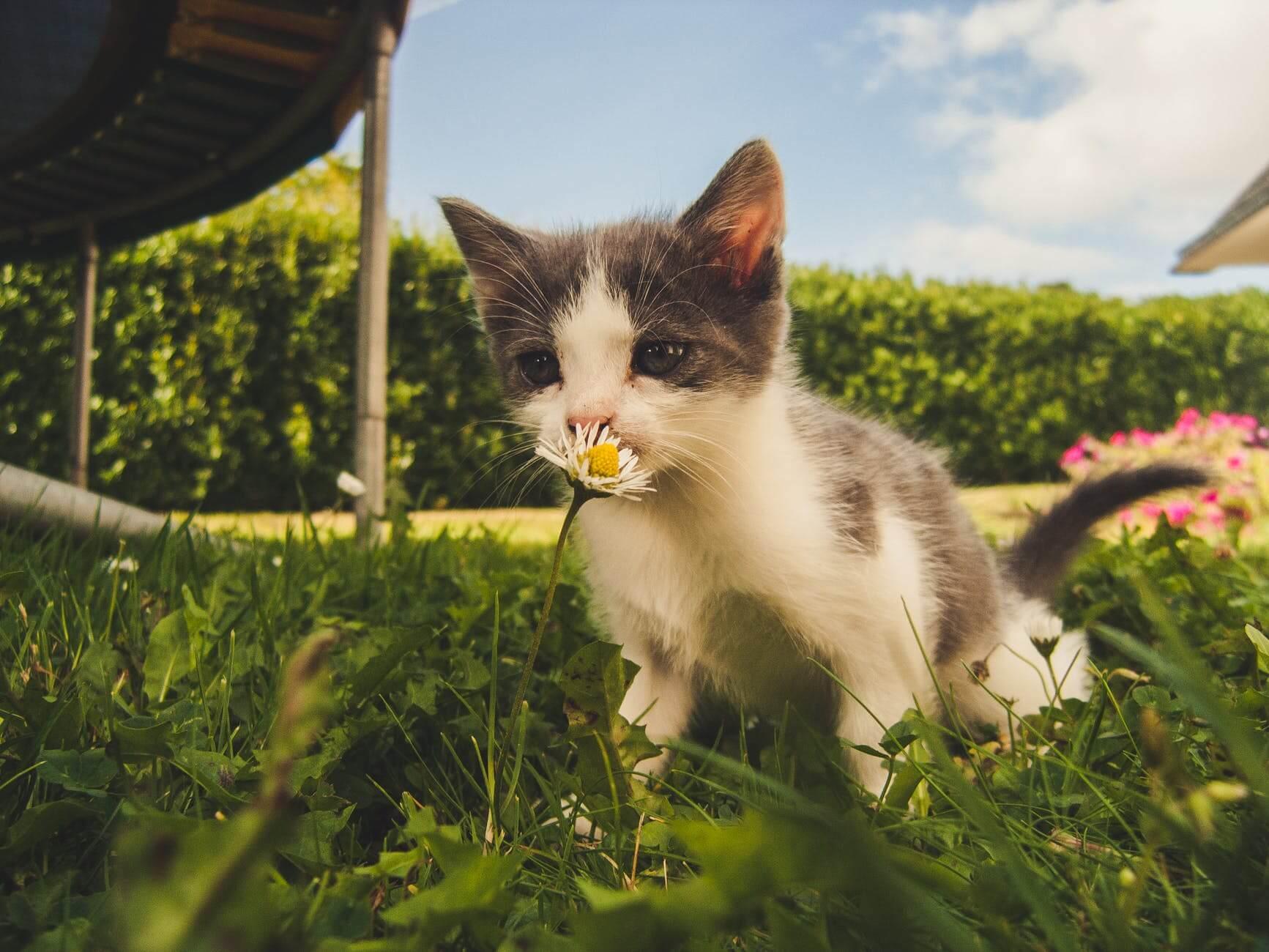 filets et grillage de protection fenetre chat