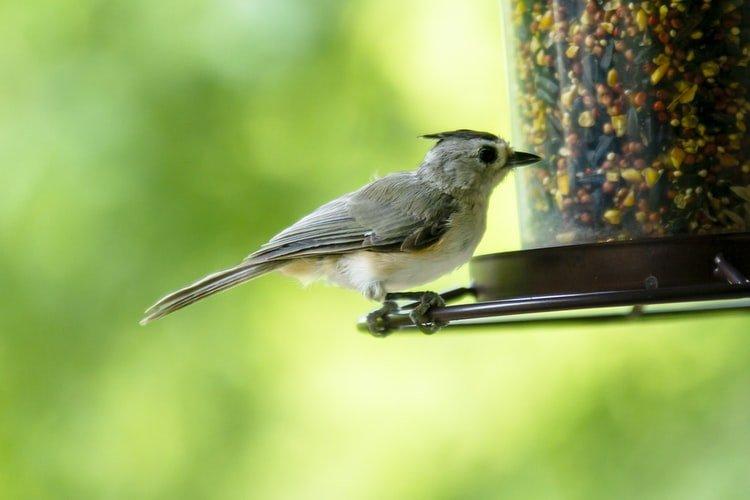 Mangeoire oiseaux sur pied