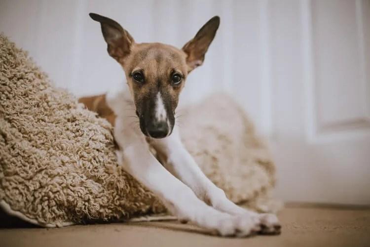 Panier pour chien entièrement dehoussable