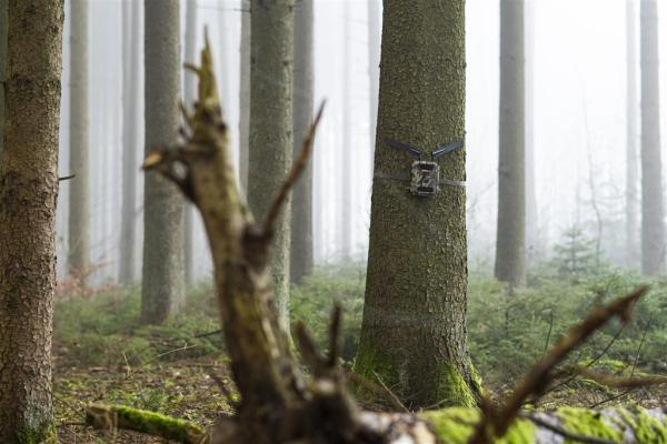 DÖRR Wildkamera 5G - 5 bei Jagdabsehen