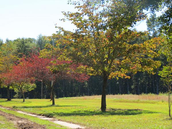 Fall Colors in SC