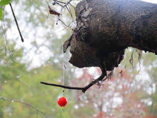 Fishing Bobber in Tree