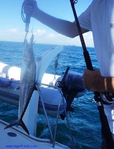 Catching a Wahoo Fish