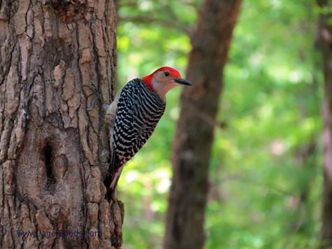 Woodpecker Lake Wateree SP