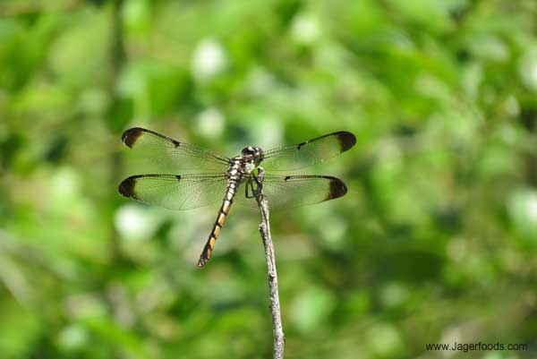 Close up of a dragon fly