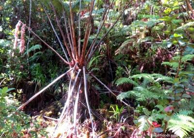 Nationa Park Hawaii Rainforest