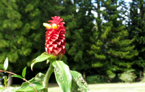 Botanical Garden near Hilo HI