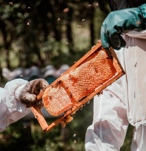Backyard bee keeping made simple