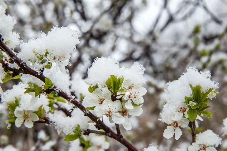 Переживет ли урожай резкое похолодание в Днепропетровском регионе и других областях?