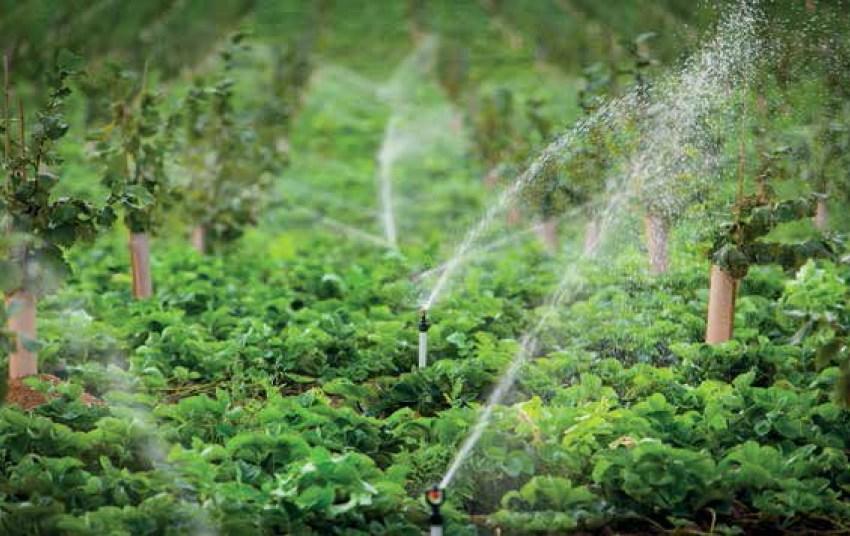 Как выбрать идеальный полив для ягодных культур