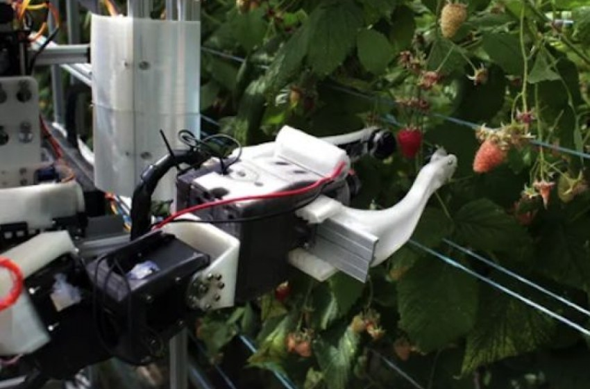 Науковці створили робота, який збирає ягоди швидше за людей