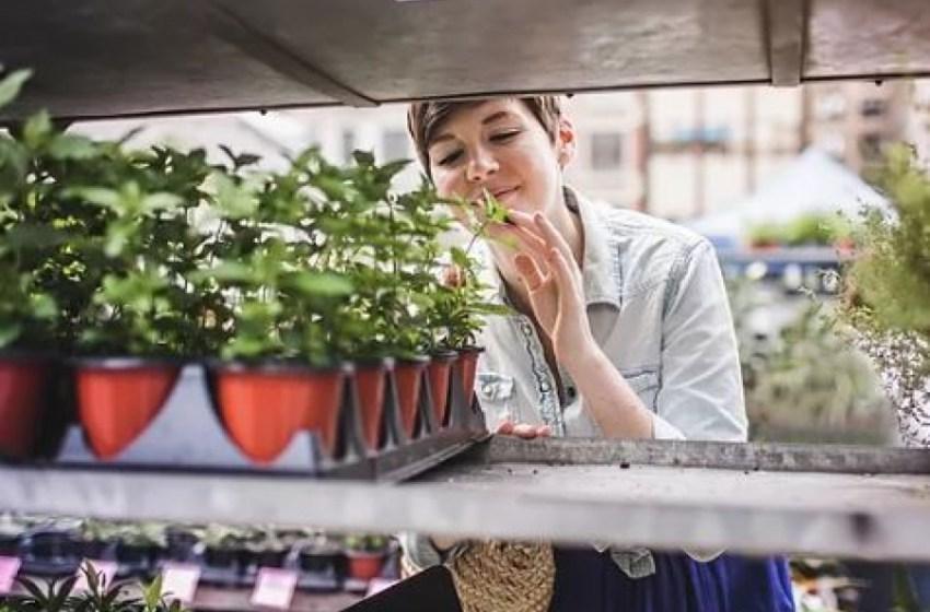 Хвора рослина. Як правильно поставити діагноз?