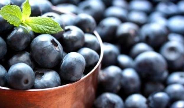 Особливості вирощування лохини обговорюватимуть на Дні саду