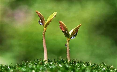В Україні росте попит на органічні саджанці
