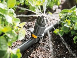 Економимо воду, бережемо рослину – як забезпечити ділянку крапельним поливом