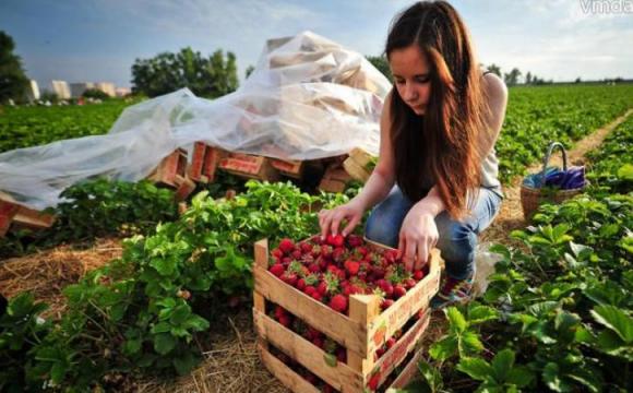 Естонські фермери повстали на захист українських заробітчан