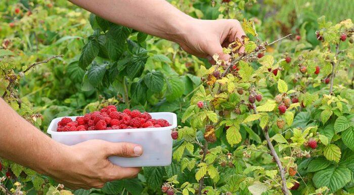 На Сумщині з'явиться плодово-ягідний центр