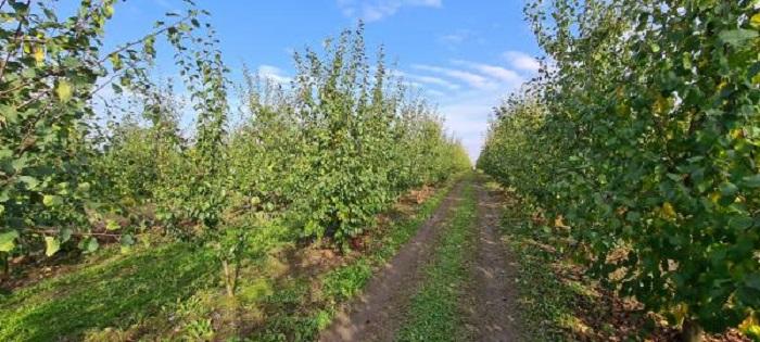 Конференція з кісточкових: 11 червня відбудеться бізнес-тур на провідні садівничі підприємства Черкаської області