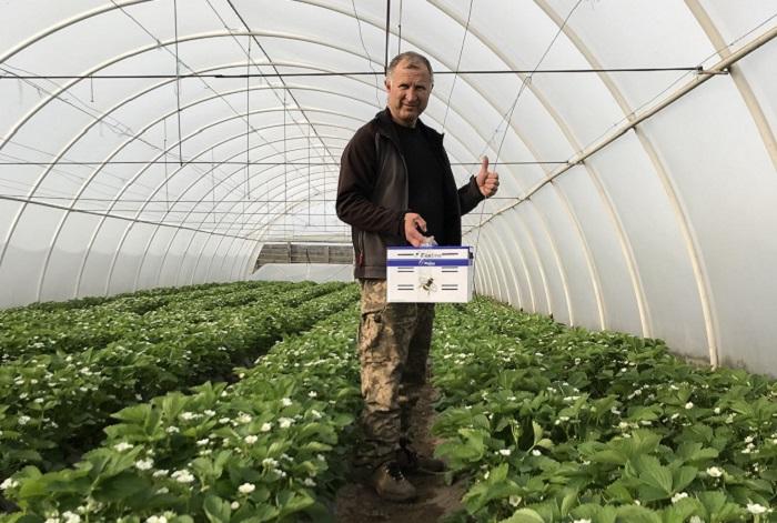 На ягідній фермі самообслуговування Arkush UА можна власноруч назбирати суницю