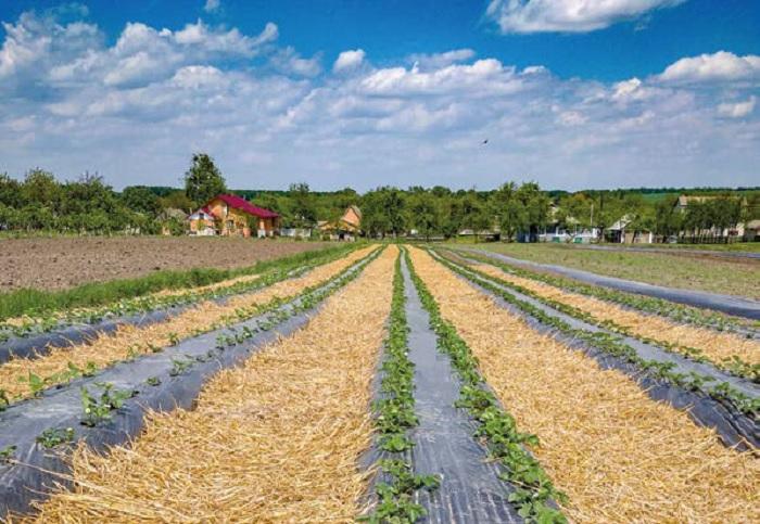 Farm to Fork strategy: кооператив «Ягідний рай» успішно розвиває європейську концепцію на Хмельниччині