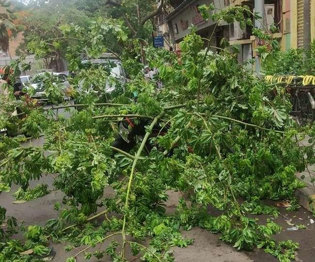 Cyclone Vayu Live: गुजरात से पहले मुंबई पर तूफान का कहर, 70 किमी की रफ्तार, उखड़े पेड़