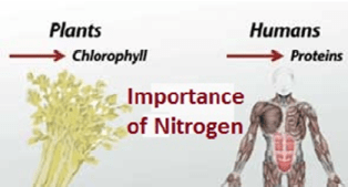 Why Human body requires Nitrogen?