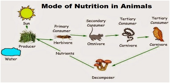 Mode Of Nutrition In Animals