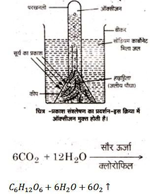 UP Board class 10 science notes on Photolysis
