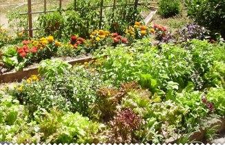 """Résultat de recherche d'images pour """"jardin potager"""""""