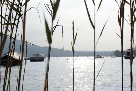 roseau et lac d'Annecy