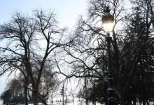 rayon au travers des arbres