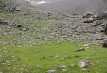herbe au milieu du pierrier