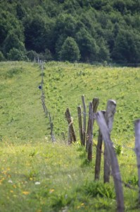 champ des Aravis
