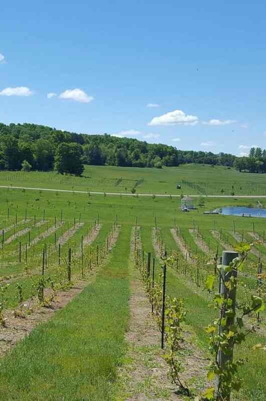 Grapes and Wines of the Petoskey Wine Region