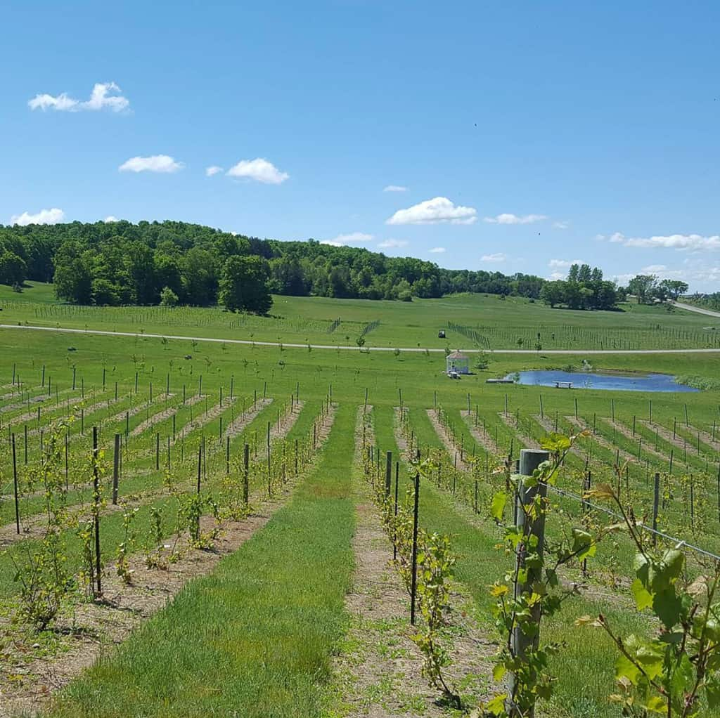 Petoskey Wineries Visit as one of the things to do in Petoskey