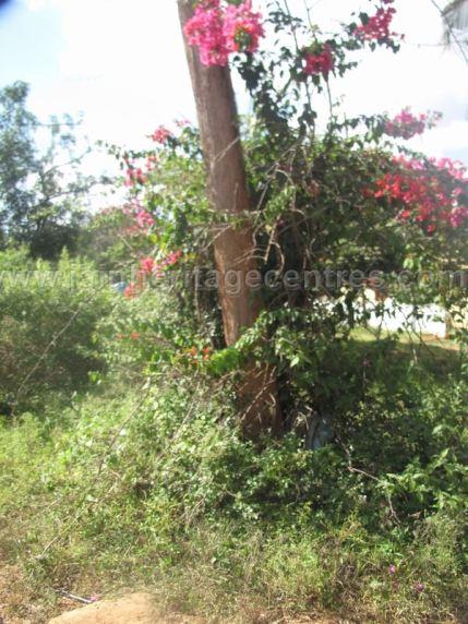 jain_ruins_of_kumarabeedu_mysore_district_karnataka_20131216_1859353003