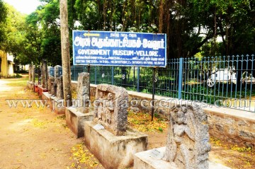 jain_idols_at_government_museum_in_vellore_of_tamil_nadu_20160416_2011334867