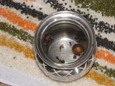 kalikundala_aradhana_20121019_1624395122