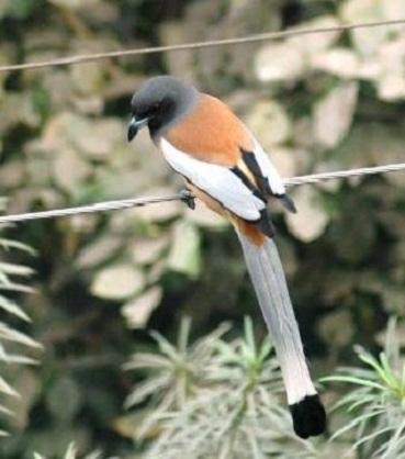 Birds Shock