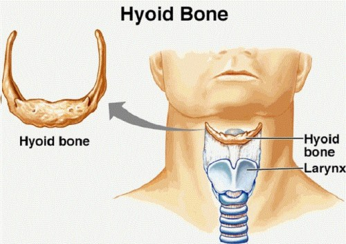 Hyoid Bone