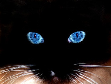 Eyes of Cats Glow