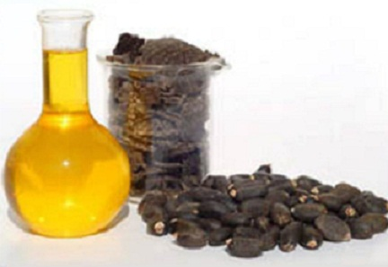 Jathropha Oil