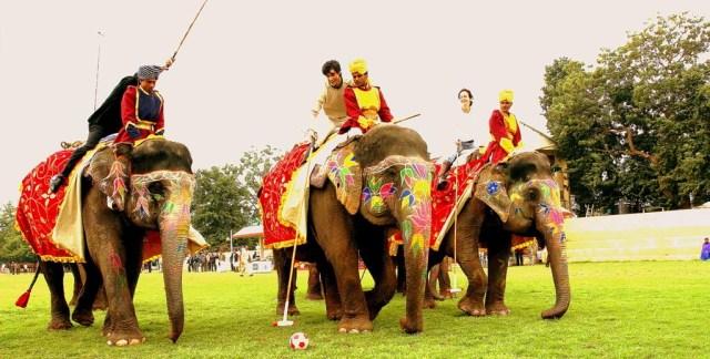 Elephant Polo