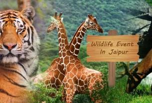 wildlife event in Jaipur