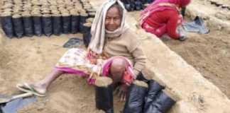 कोसी-में-होगी-ग्रीन-गोल्ड-की-खेती,-बढ़ेगी-किसानों-की-आय