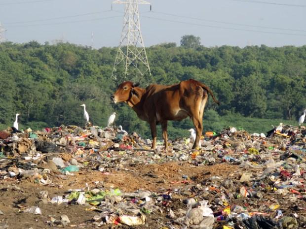 ゴミ捨て場を見学したりとか